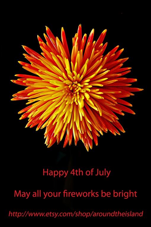 """""""Firework"""" Chrysanthemum"""